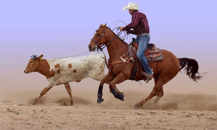 Airport Transfer Houston - Rodeo Transportation